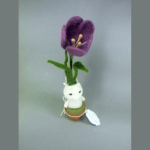 Baby Sprout Crocus